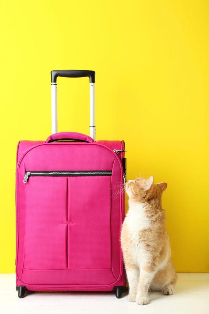 voyager avec son chat en avion