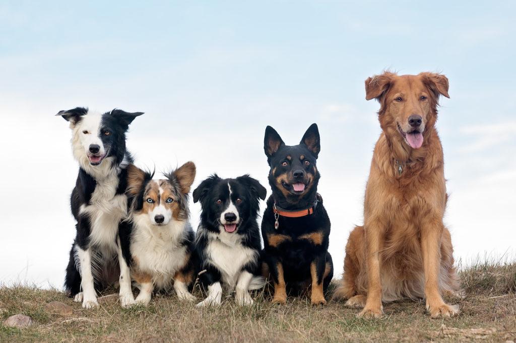 dogsitter pour faire garder son chien pendant les vacances