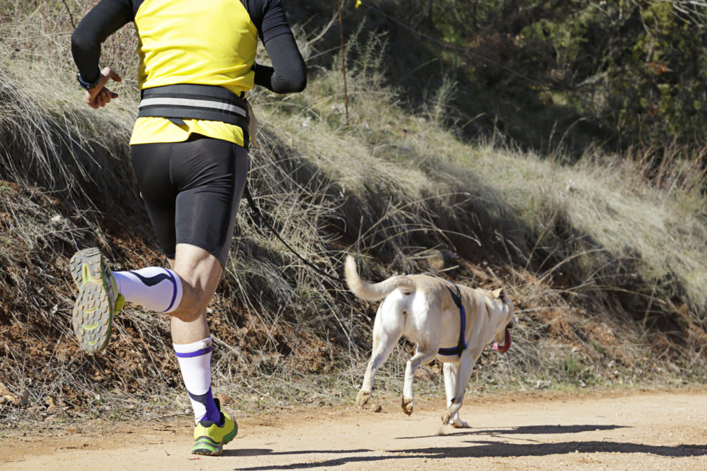 canicross avec son chien