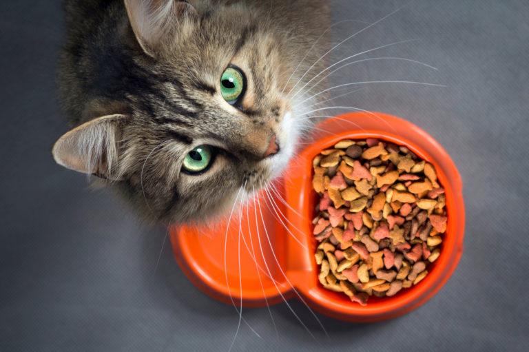nourriture monoprotéine pour chat