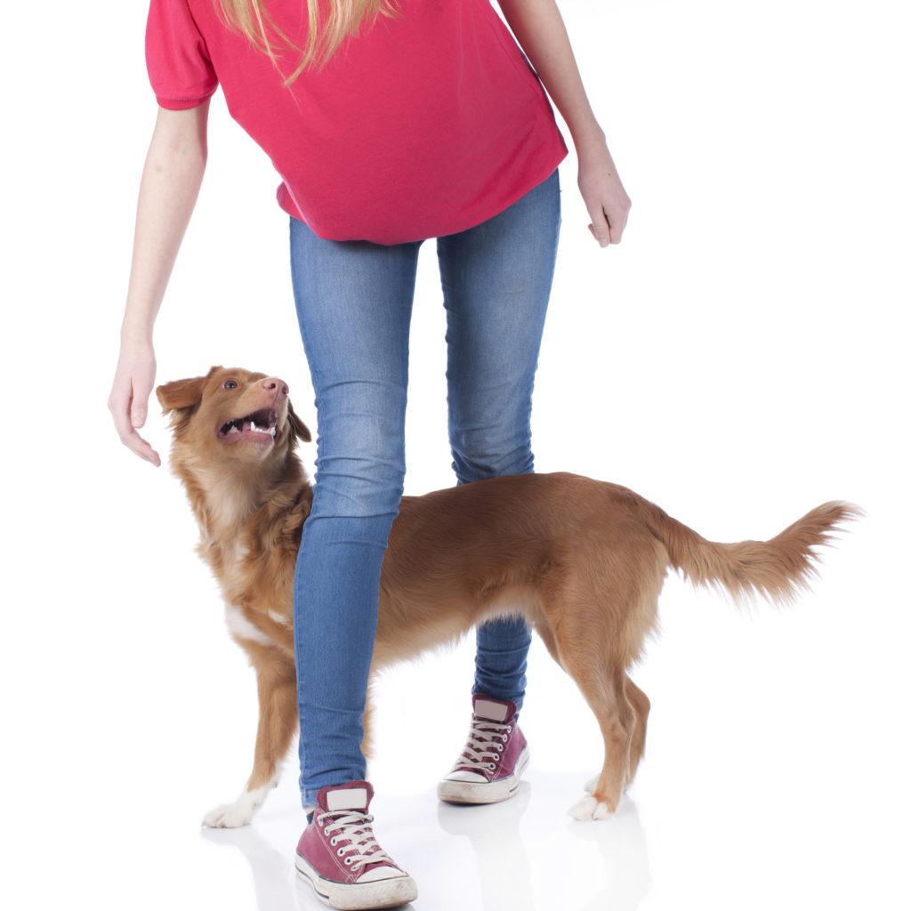 obérythmée dog dancing