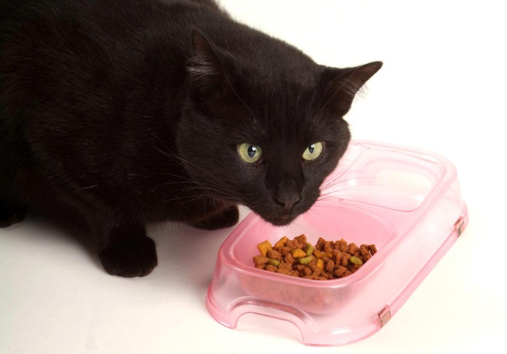 nourrir son chat sensible