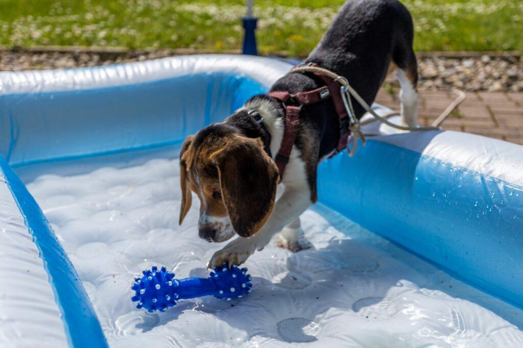 chiot qui joue dans la piscine