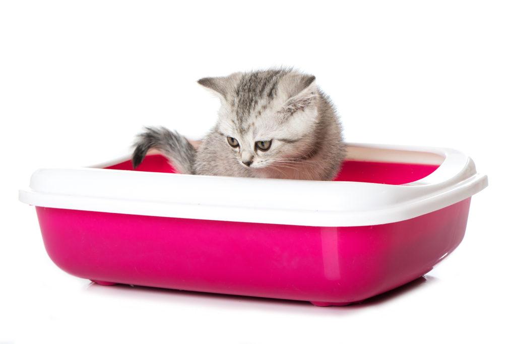 Chaton dans son bac à litière rose flashy