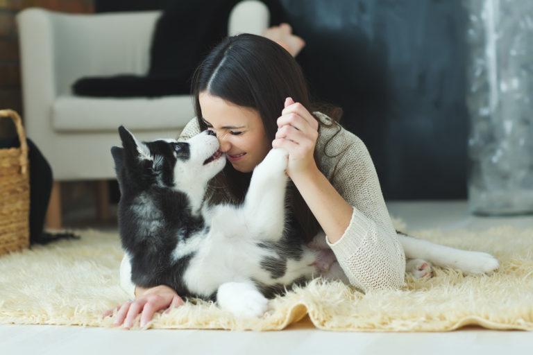 chien noir et blanc qui joue avec sa maîtresse sur le tapis