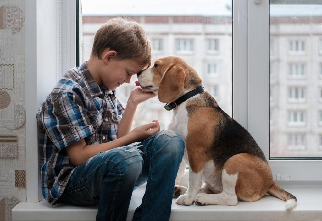 petit garcon avec son beagle assis devant la fenêtre