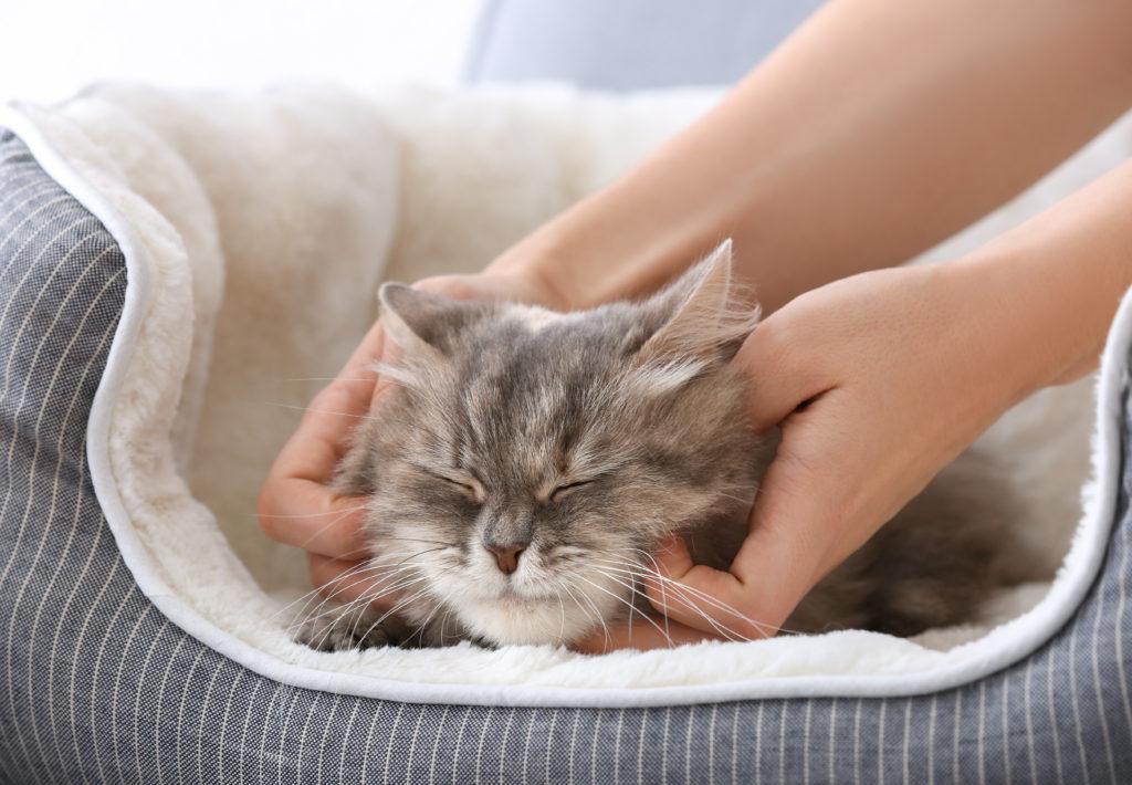 chat gris dans son panier en train de se faire carresser