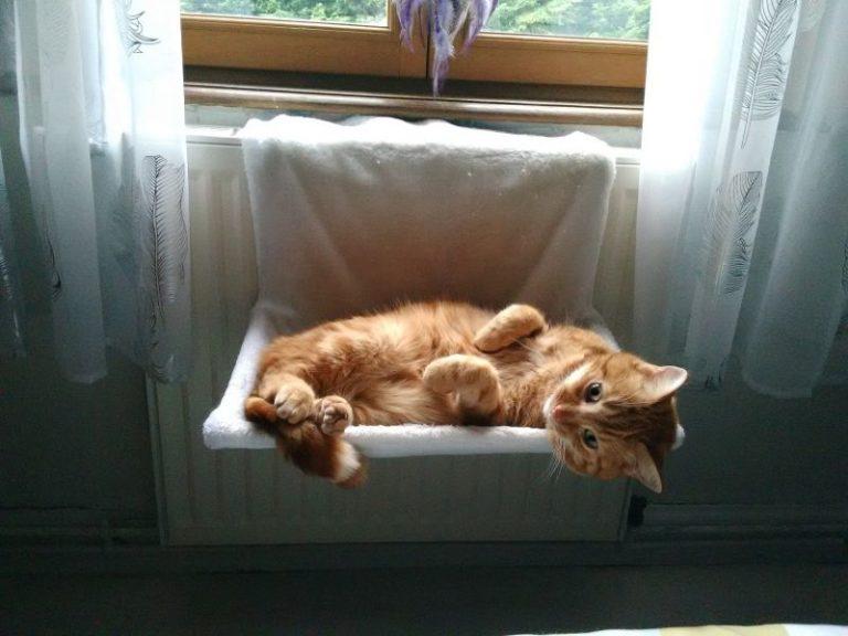 chaton couché dans un panier accroché au radiateur