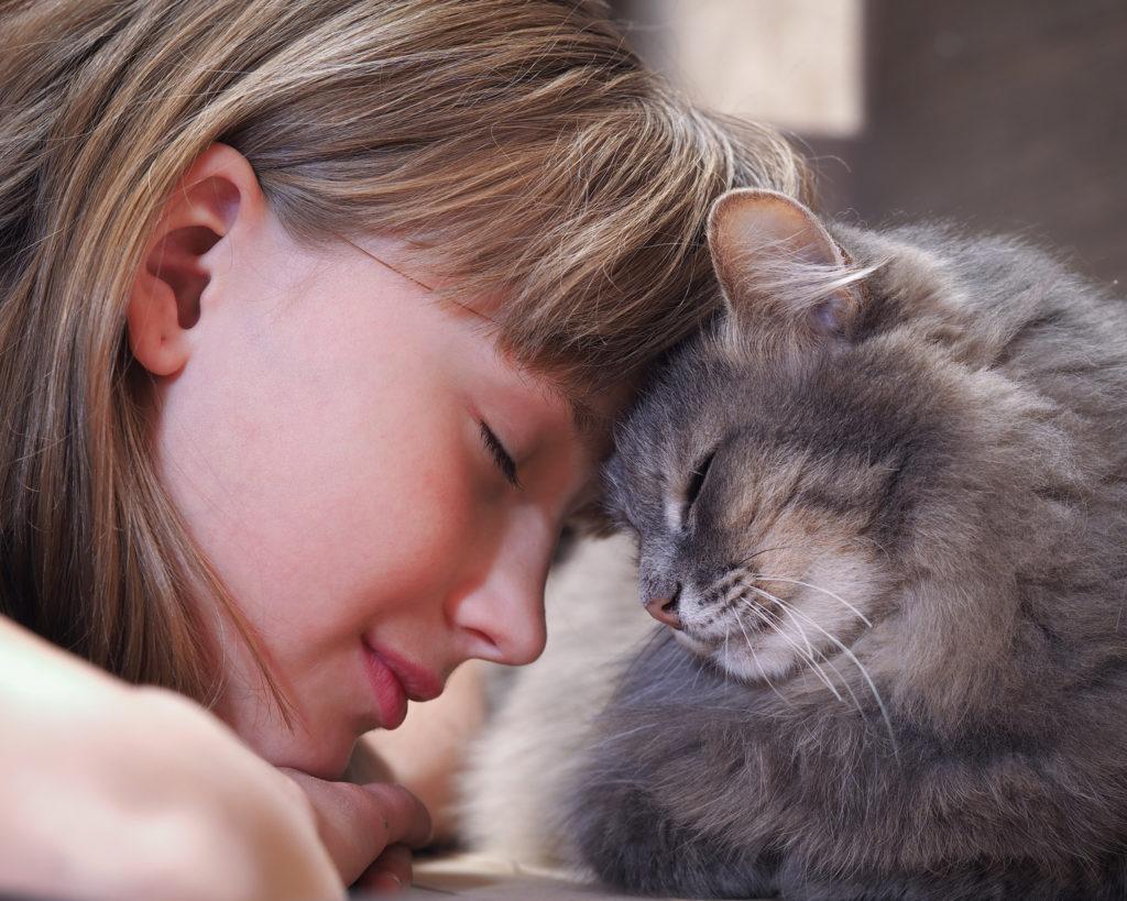 chat frotte son nez contre celui d'une petite fille