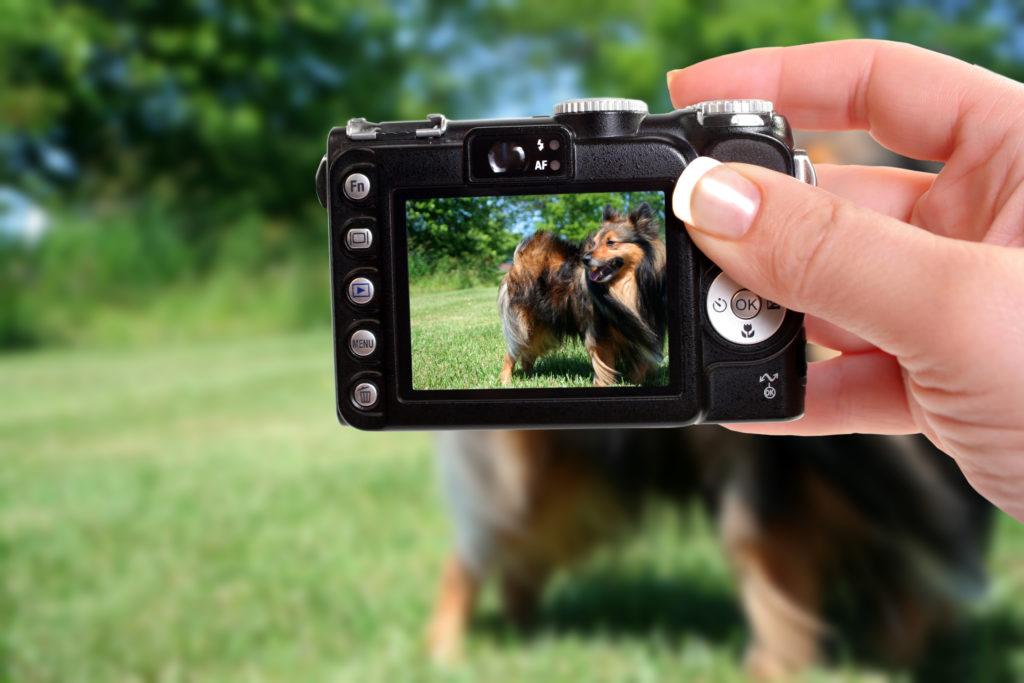 mieux photographier son chien
