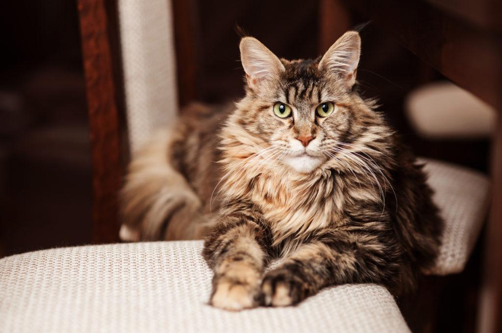 adopter un vieux chat