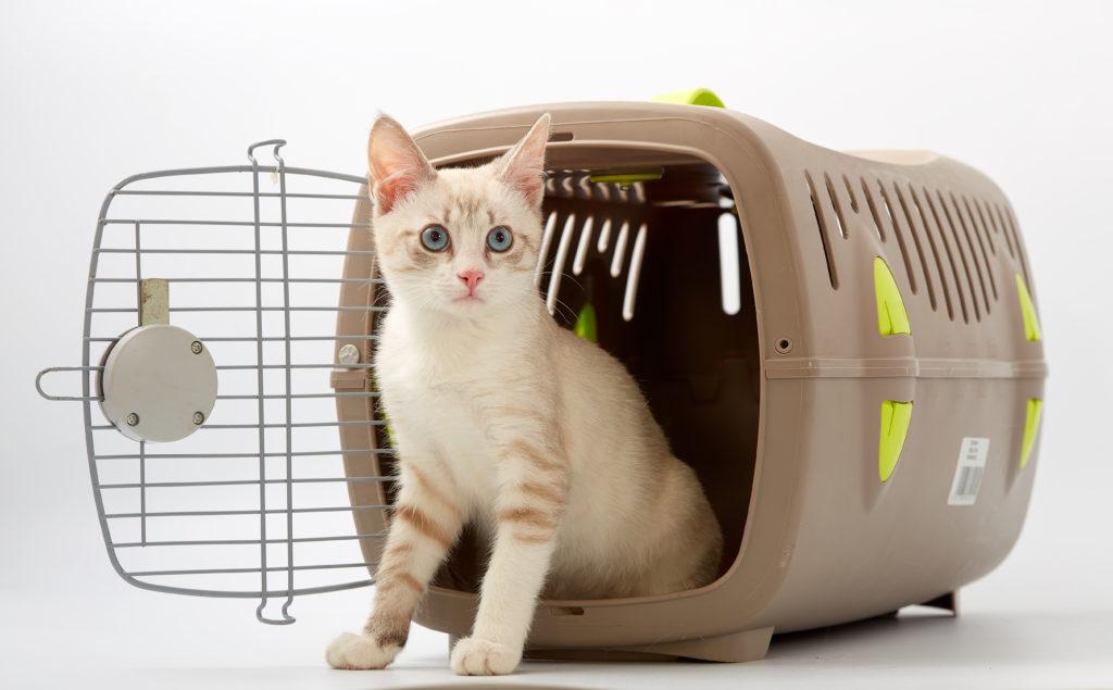 Chaton assis à l'entrée de sa caisse dans transport, dont la porte en ouverte