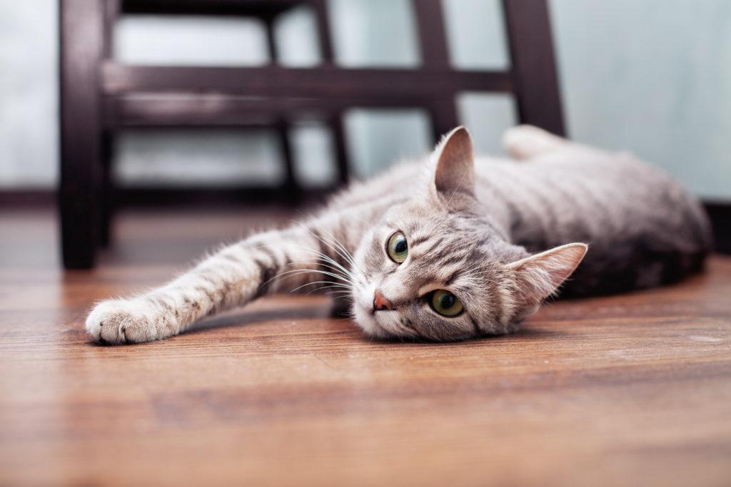 demenager avec un chat