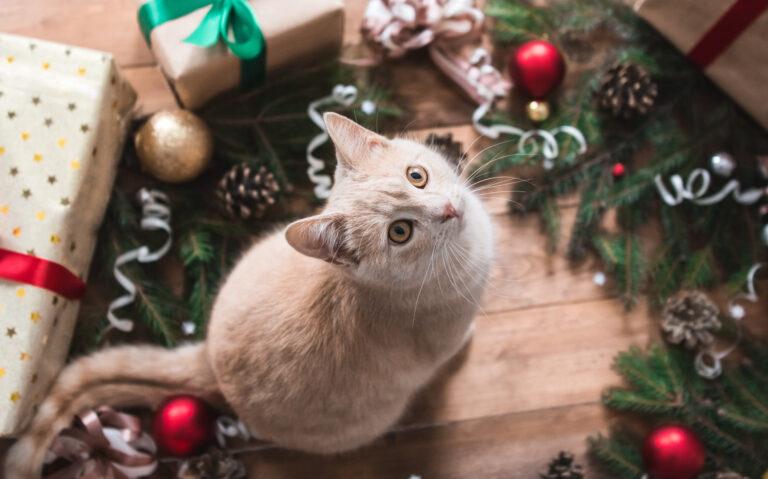 chat roux au milieu des décorations de