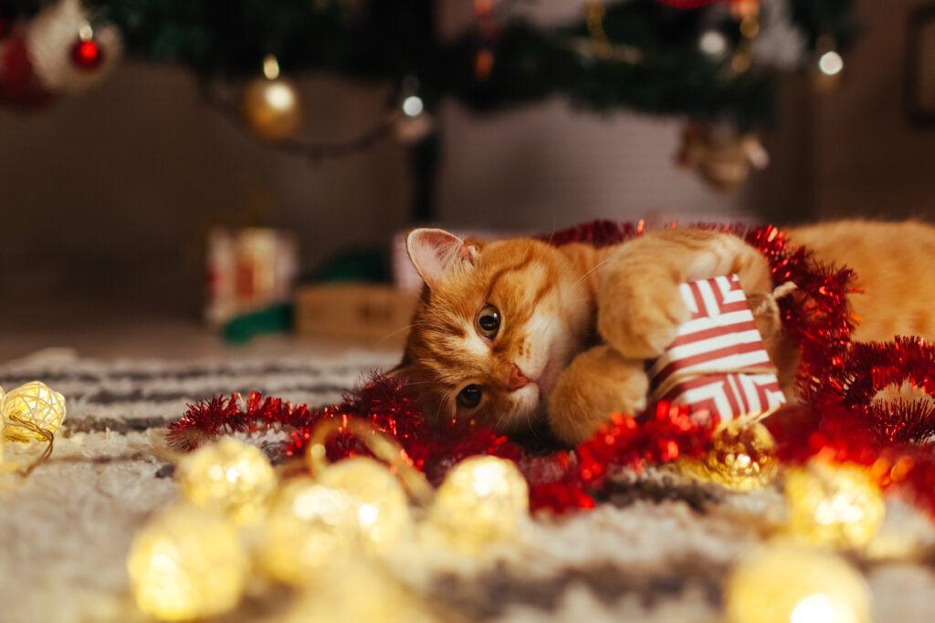 chat roux heureux au milieu de ses cadeaux de