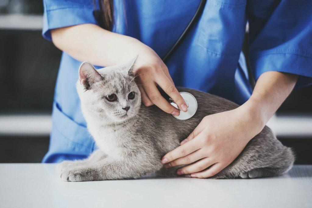 vétérinaire qui ausculte un chat