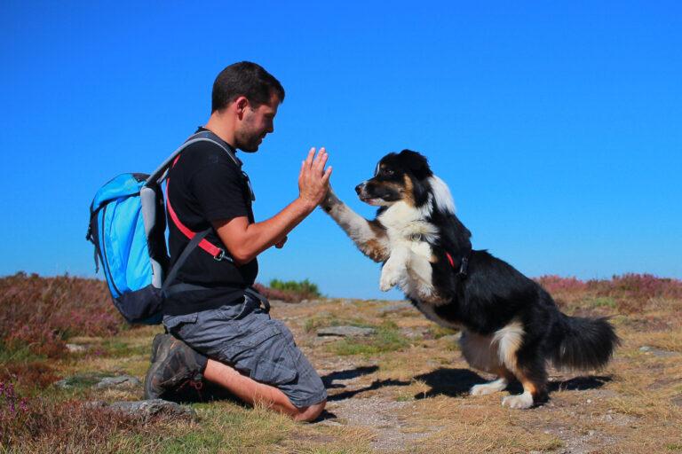 un homme et son chien se tapent dans la main