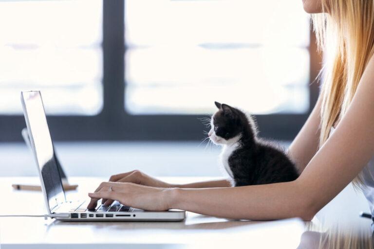 Un petit chat est assis devant l'ordinateur de sa maîtresse qui travaille