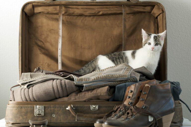 Partir en vacances sans votre chat