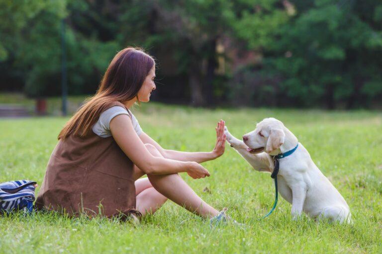 conseils pour mieux promener son chien