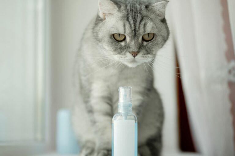 Le chat gris devant des phéromones pour chats
