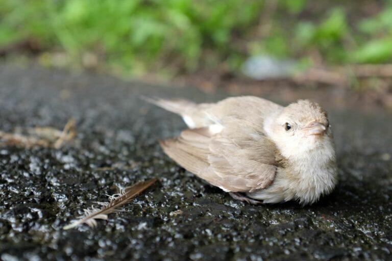 un oiseau gris assis à l'extérieur
