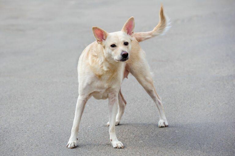un chien errant dans la rue