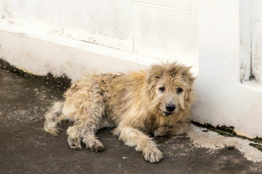un chien errant affamé dans la rue