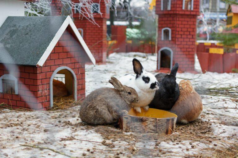 la diarrhée chez le lapin