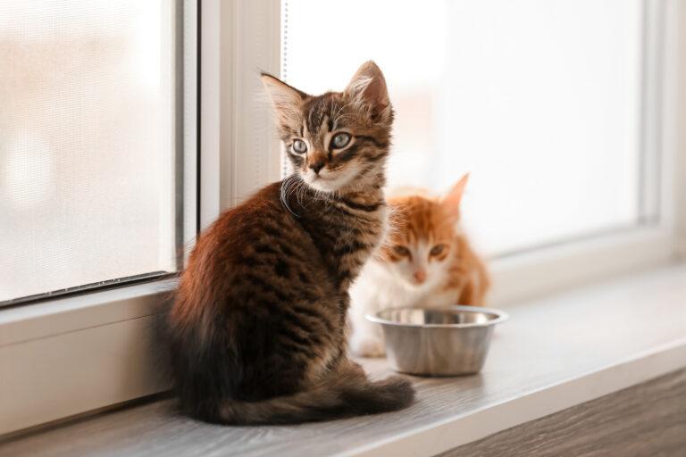 nourrir chat selon âge