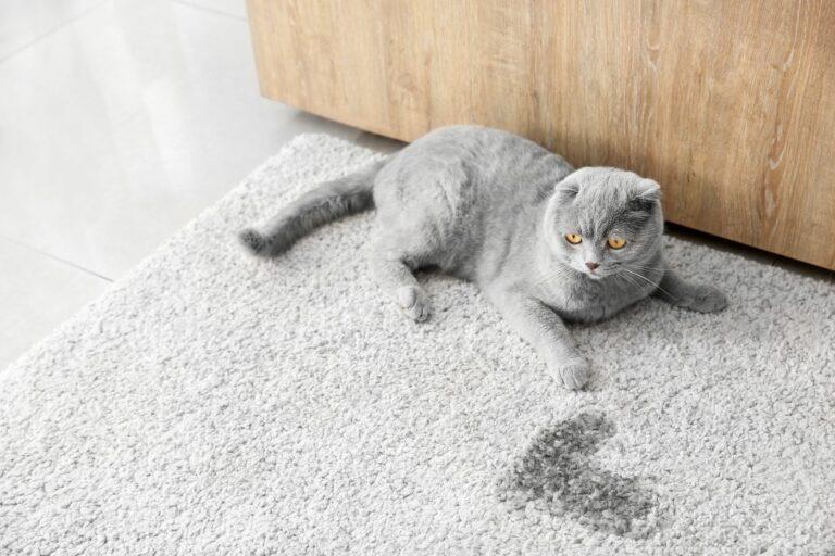 se débarasser de l'odeur de l'urine du chat
