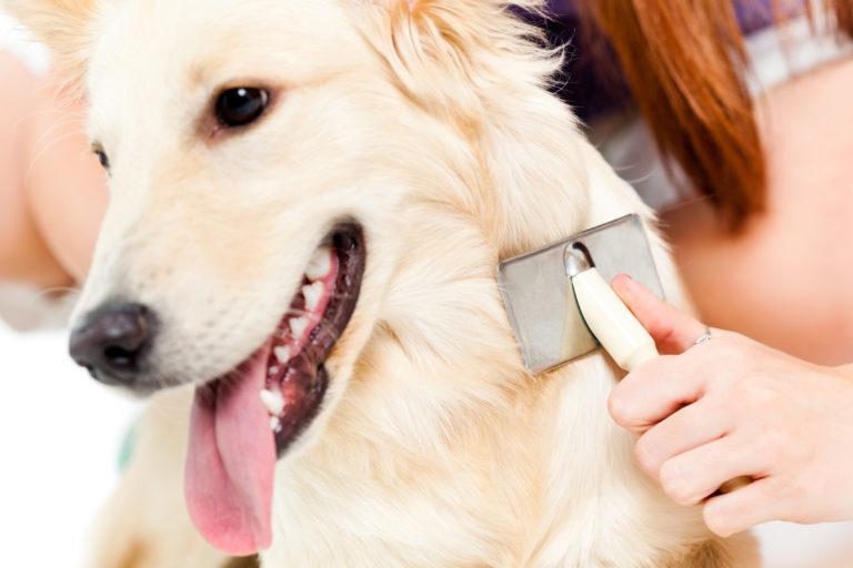 un chien se fait brosser les poils