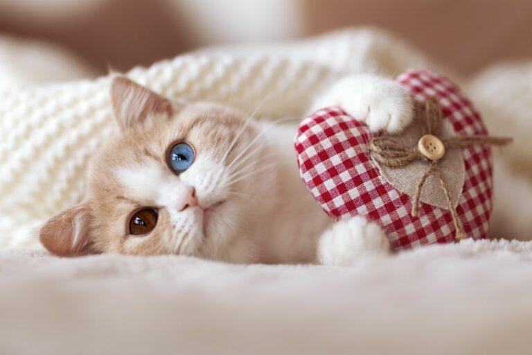 saint-valentin idées de cadeaux pour chat