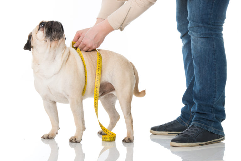 Alimentation adaptée pour chien en surpoids