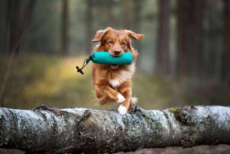 fitness canin