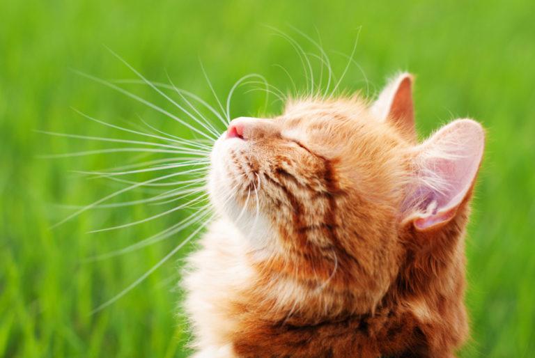 top 11 accessoires pour chat en été