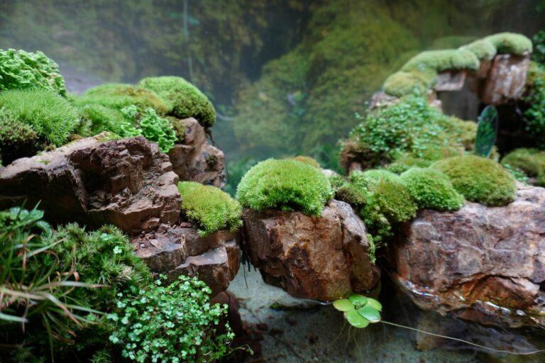 Paludarium : réunion d'un aquarium et terrarium