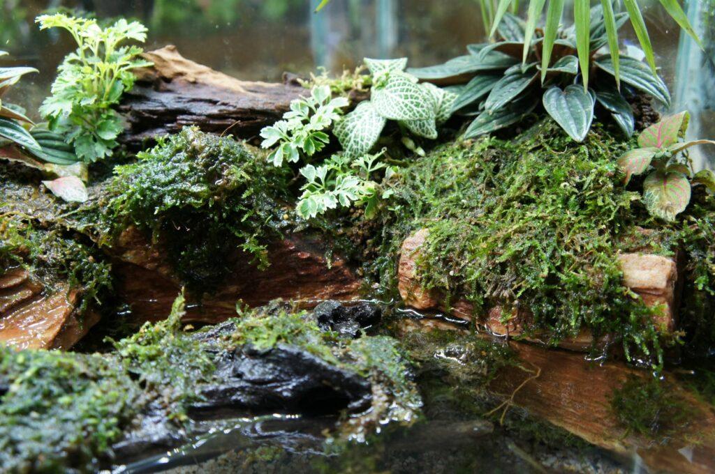 un marais miniature, le paludarium