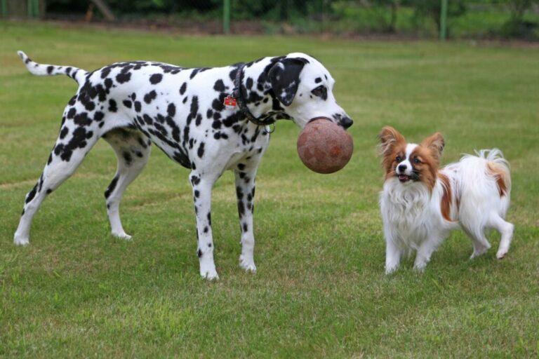 deux chiens qui s'entendent bien